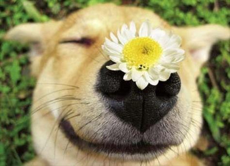 cachorro_flor-910